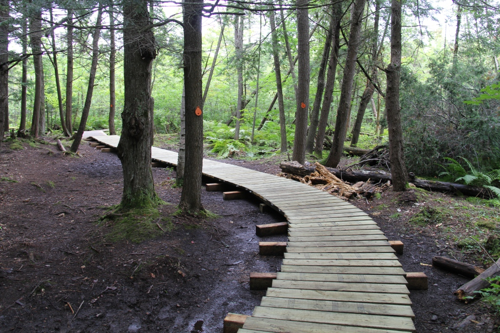 Lookout Point Trail Improvements