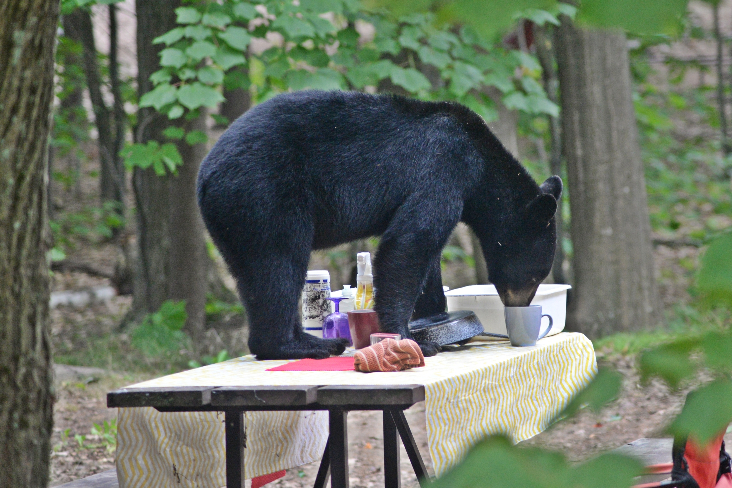 Clean dishes can attract bears! All attractants need to be put safely away when you are not on your site. Photo credit: Eric Wheeler.