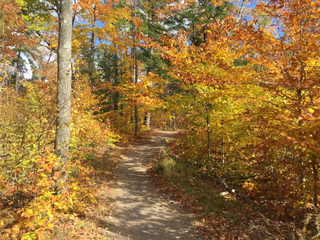 Killbear Rec Trail in Fall