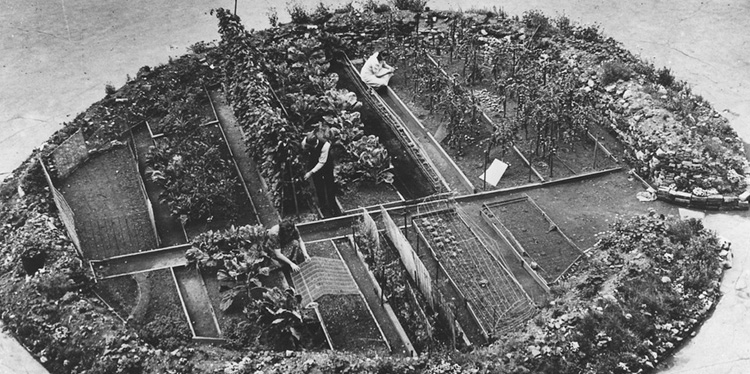 A victory garden planted in a bomb crater, London during WWII.