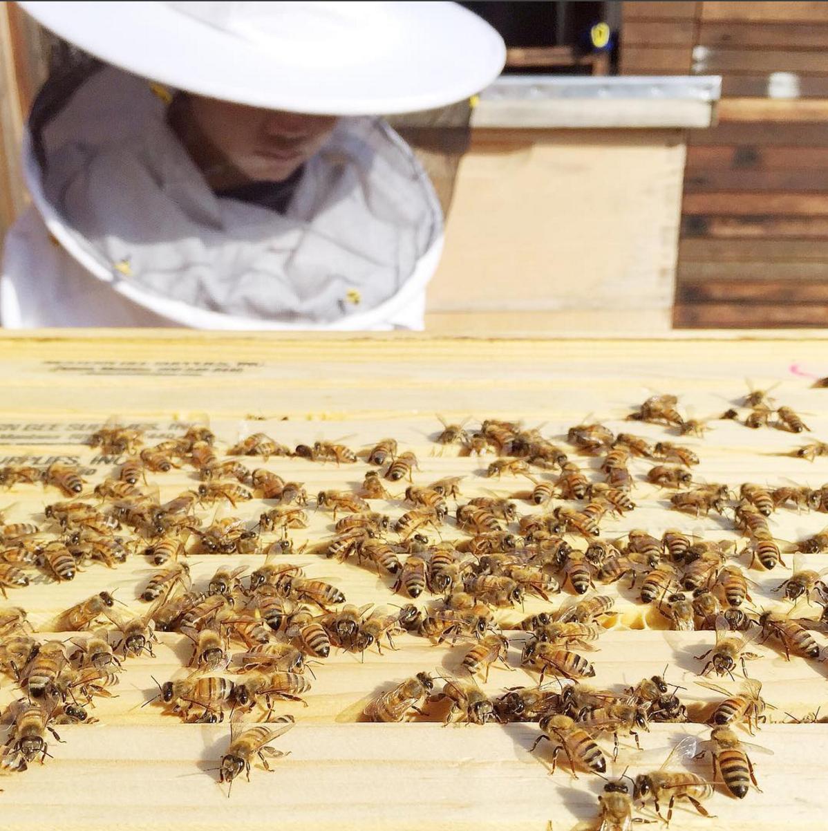 Happy bees, happy little beekeeper.