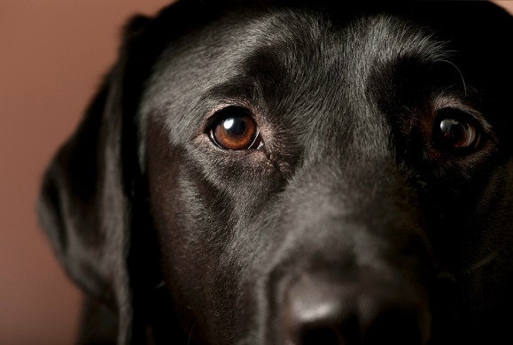 dog-eye-problems1.jpg