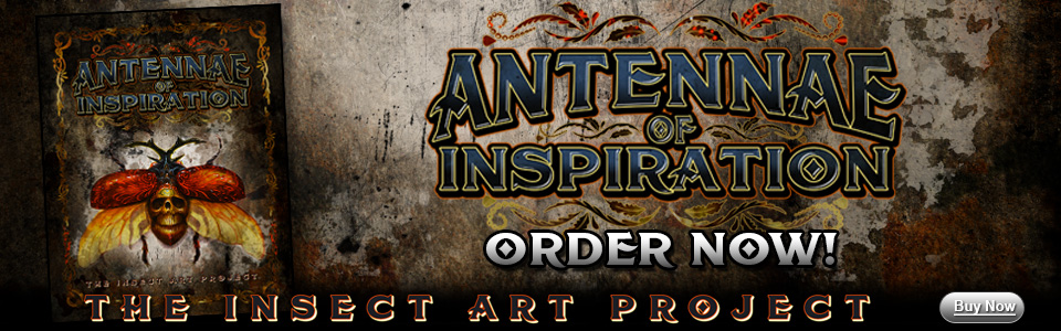 Insect_Order_Banner.jpg