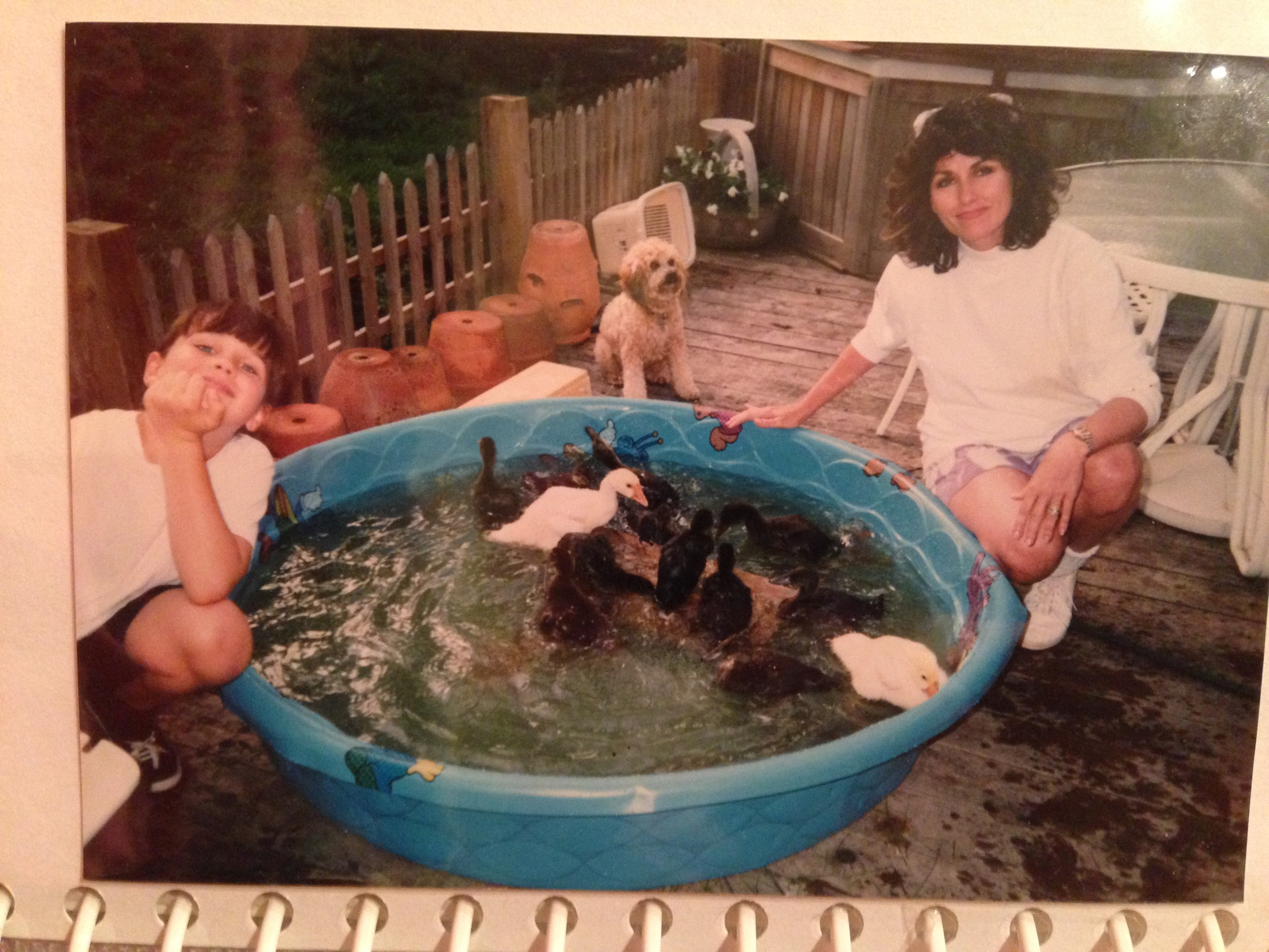 Teaching my rescue ducks to swim.