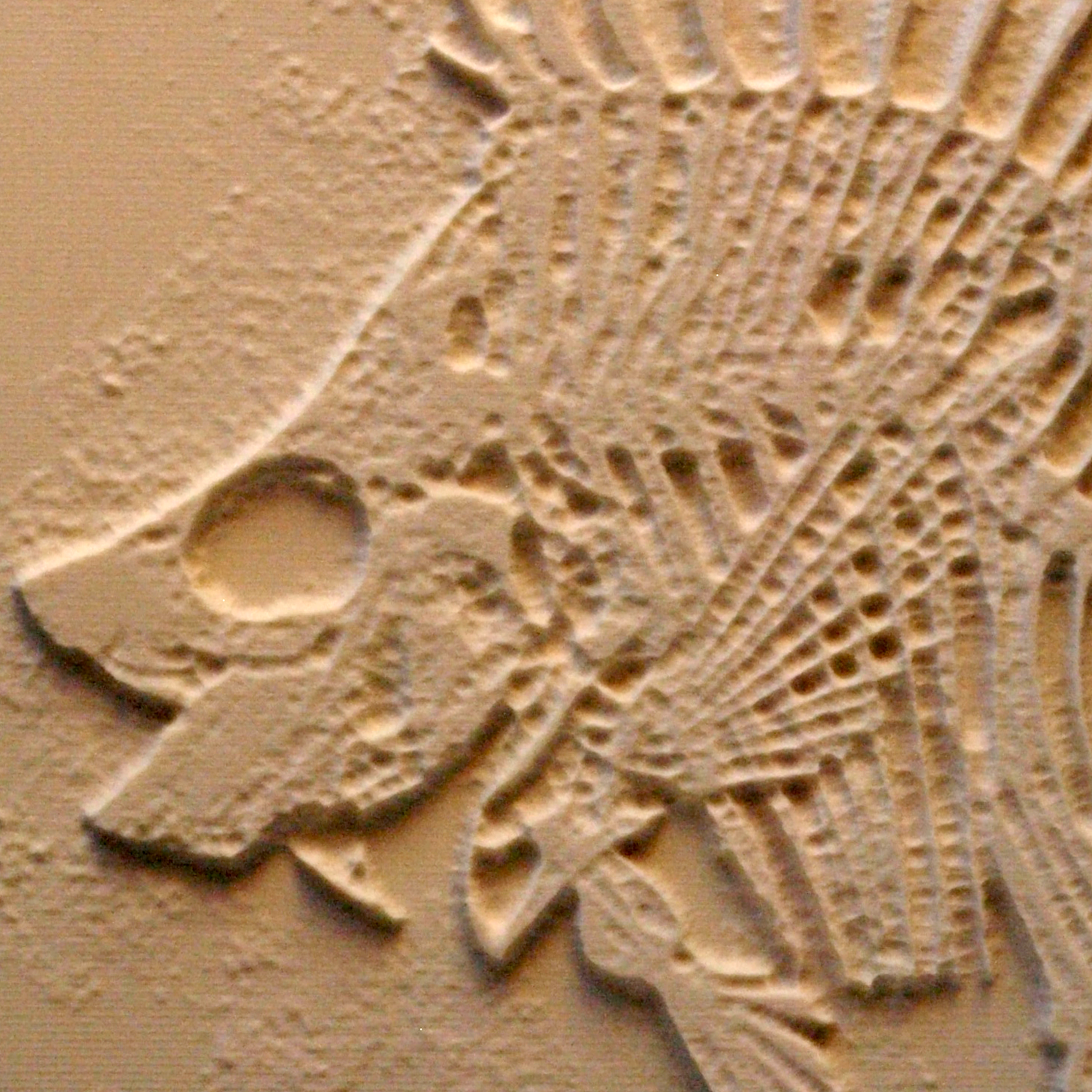 fish skeleton.png