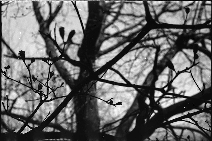 TREE CU.jpg