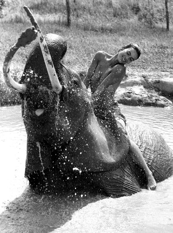 elephant Marie mare site OK.jpg