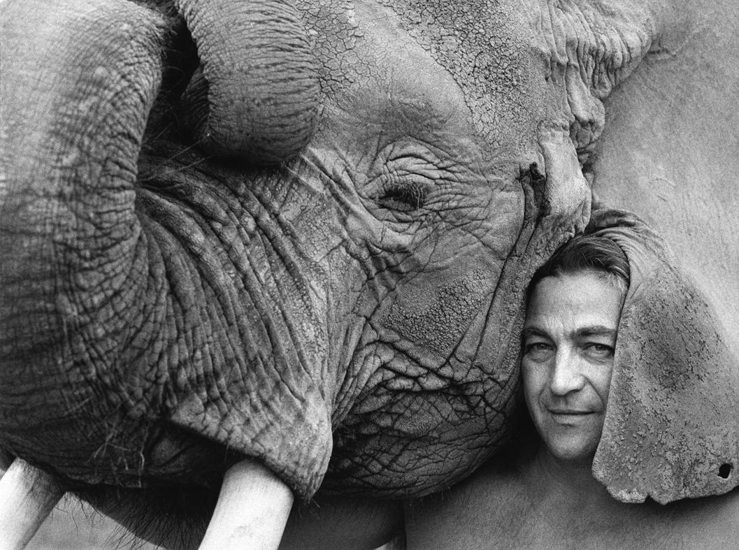 elephant oreille site.jpg
