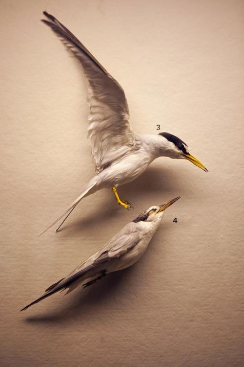Bird_Def-15.jpg