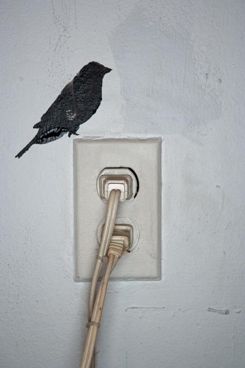 Bird_Def-31.jpg