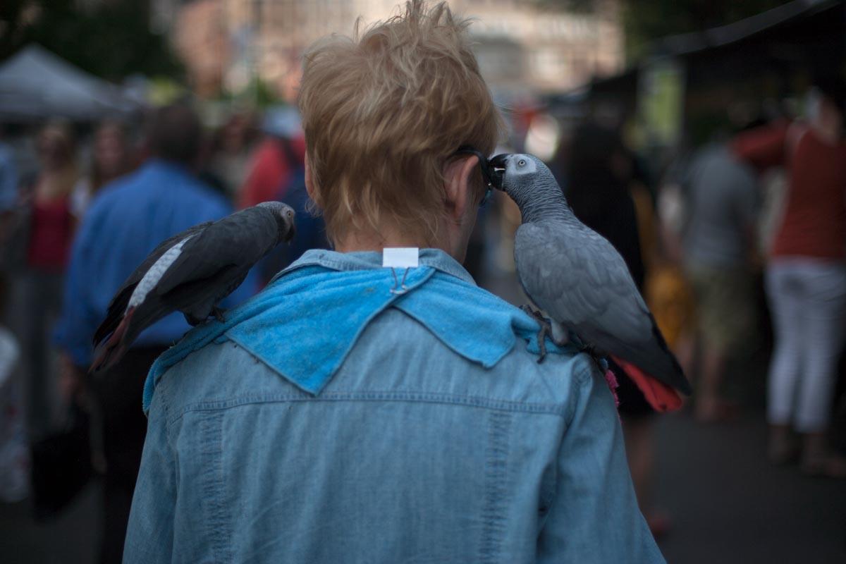 Bird_Def-34.jpg
