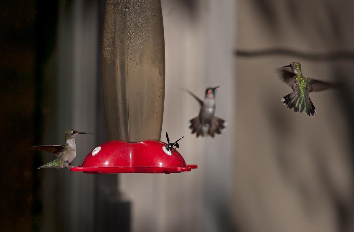 Bird_Def-40.jpg