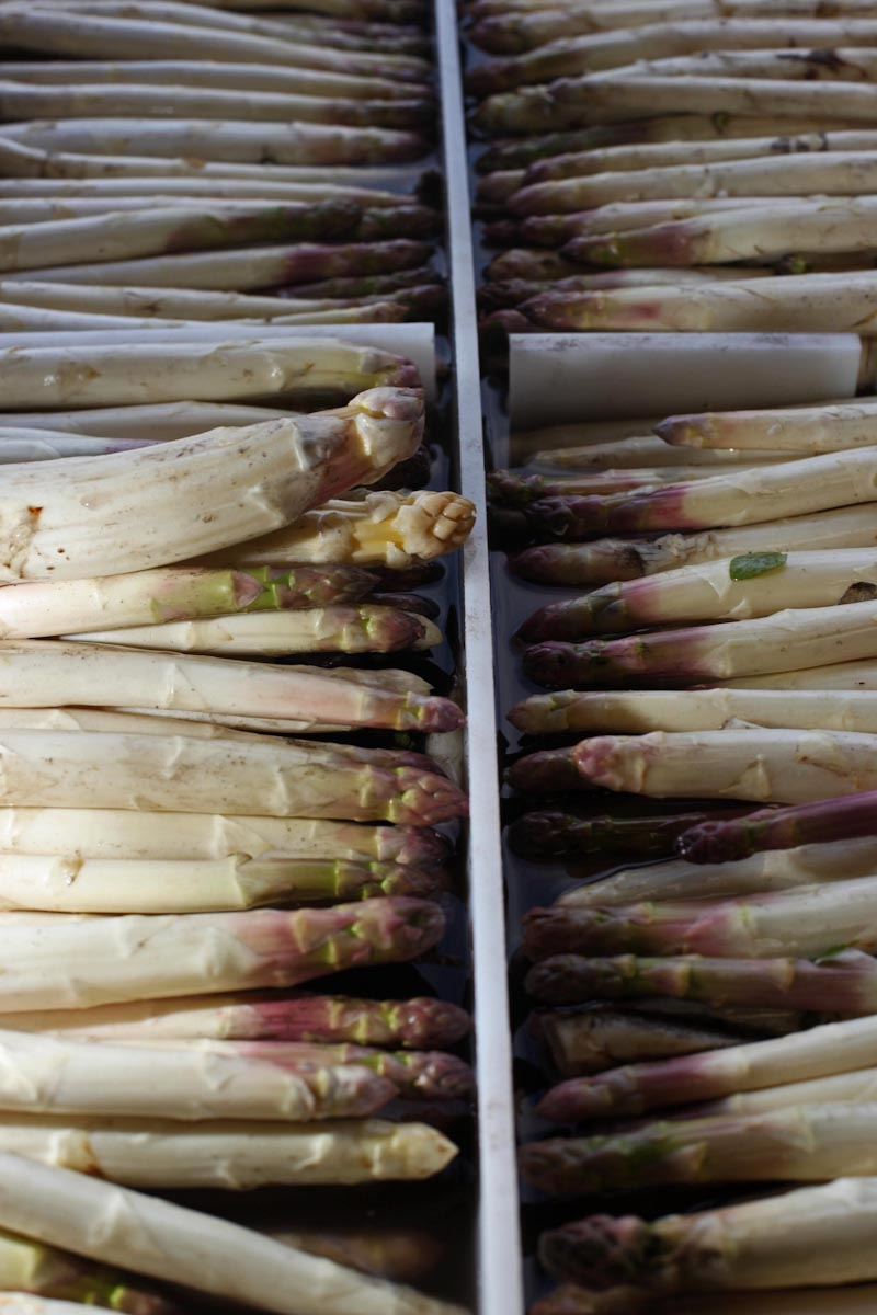 WHITE   ASPARAGUS, FRANCE'S SPRING TREAT, Story For  The New York Times