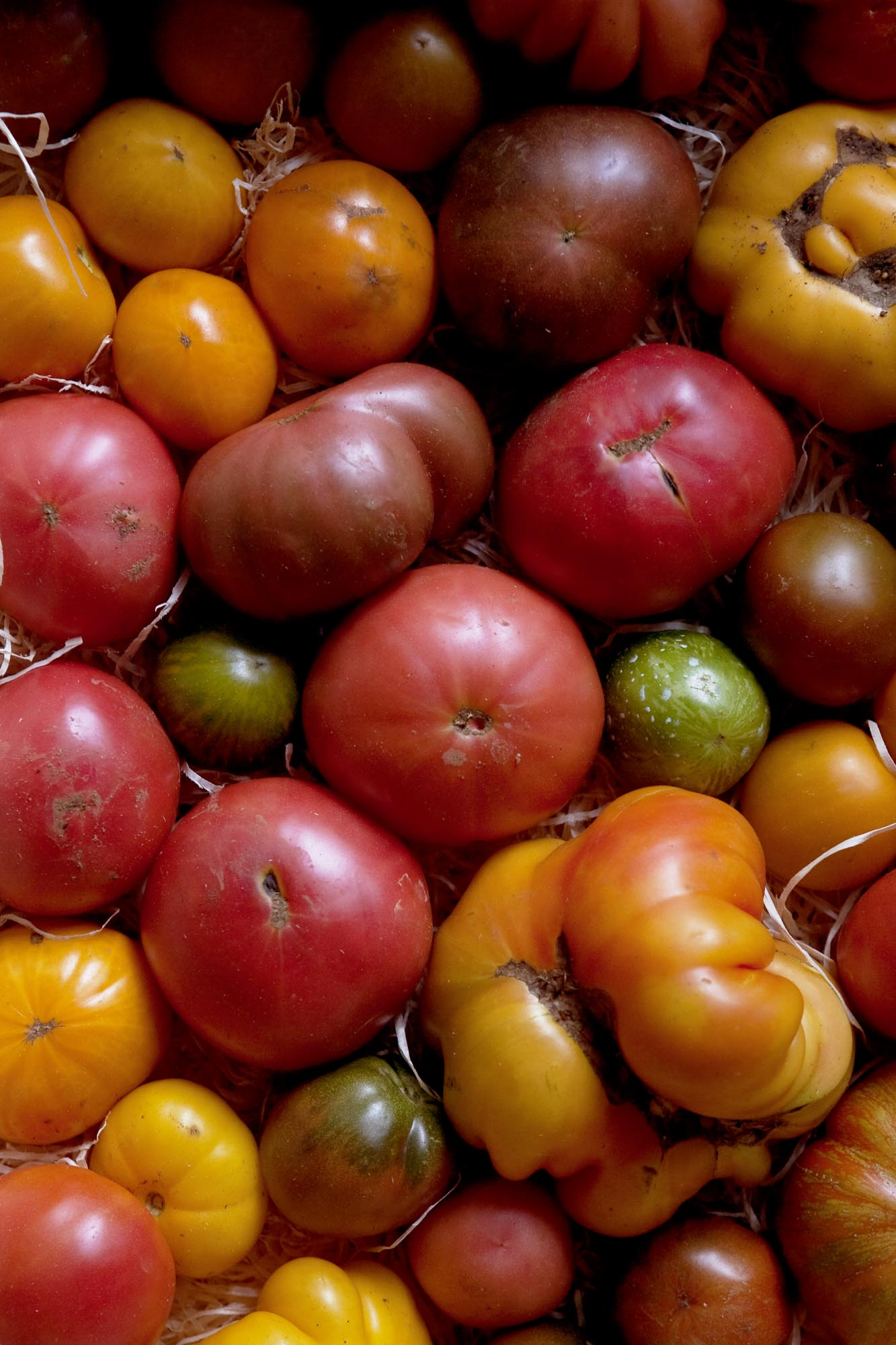 Tomatoes, Le Chateaubriand