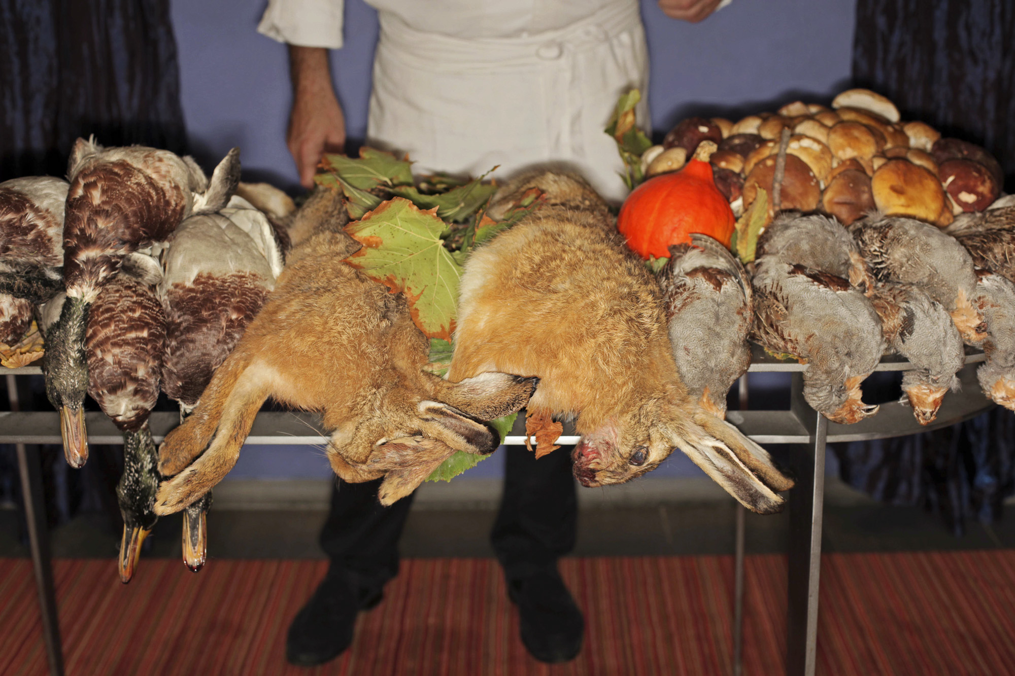 """Two Michelin stars restaurant """"Le Carr� des Feuillants """",Place Vendome, Paris.Chef Alain Dutournier is staging a 'still life' with seasonal game & other typical autumn products in France. From right to left: Mallard ducks, hares, partridges. Fresh Bordeaux ceps in the background."""