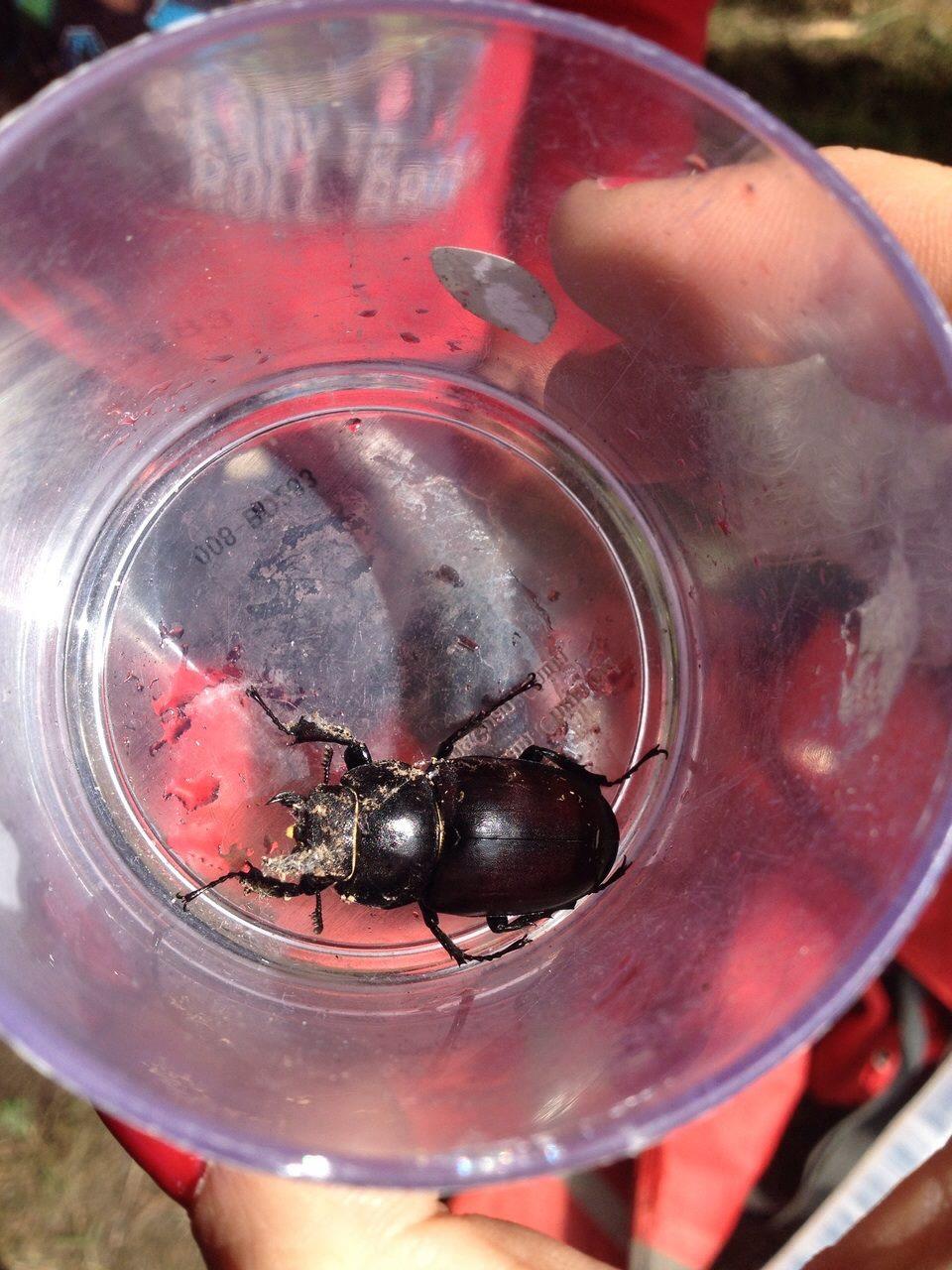 lff-summercamp-wk2-beetle.jpg