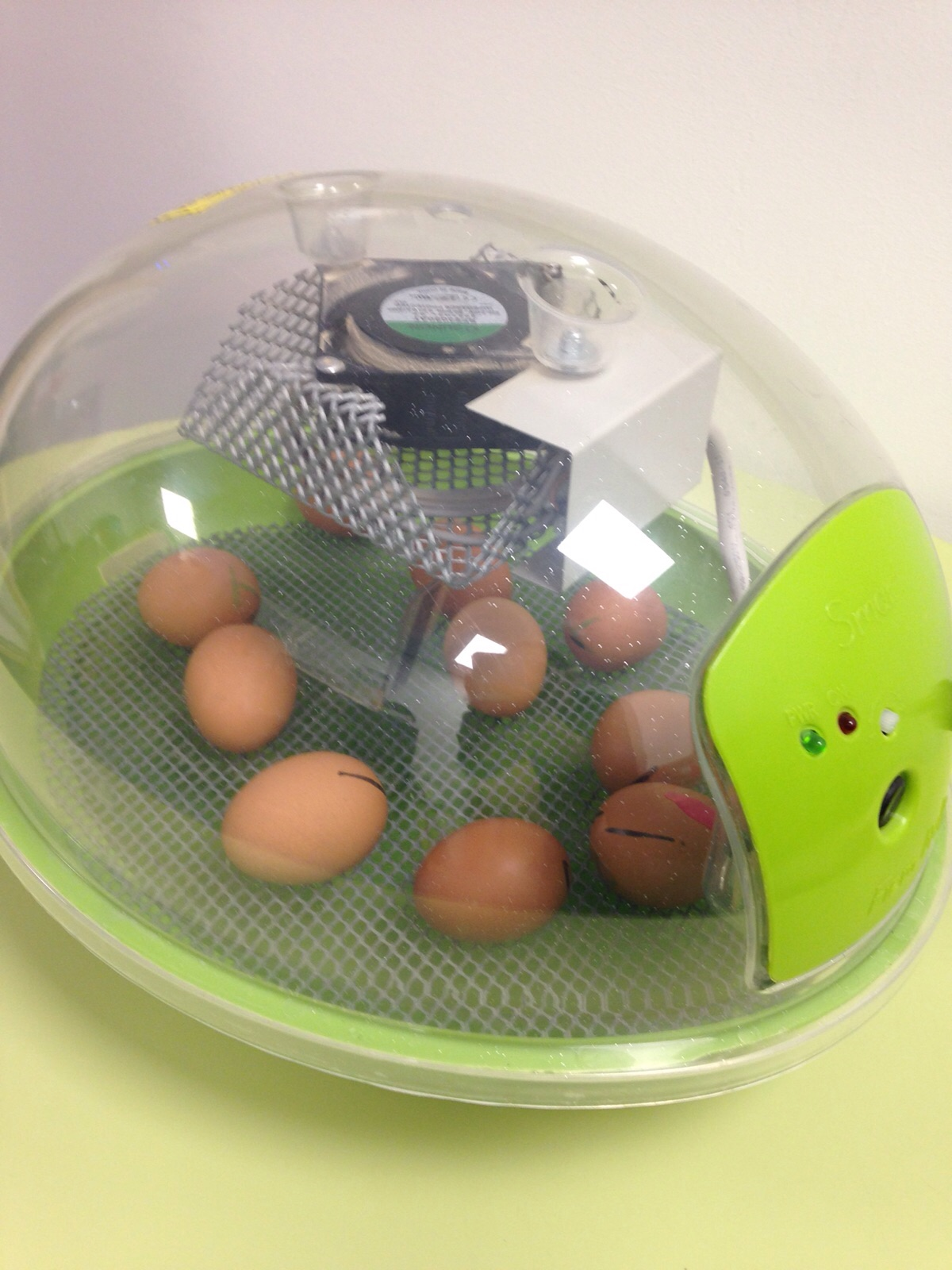 The incubator with our Eggs 2-3 days away from hatching :-)