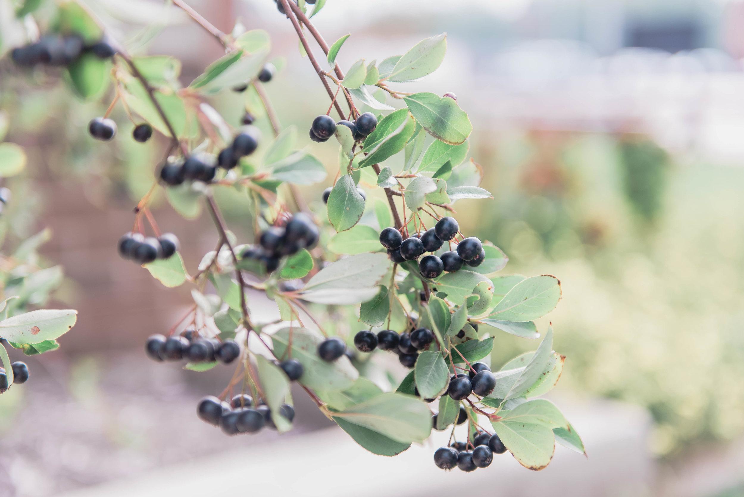 berries outside train station