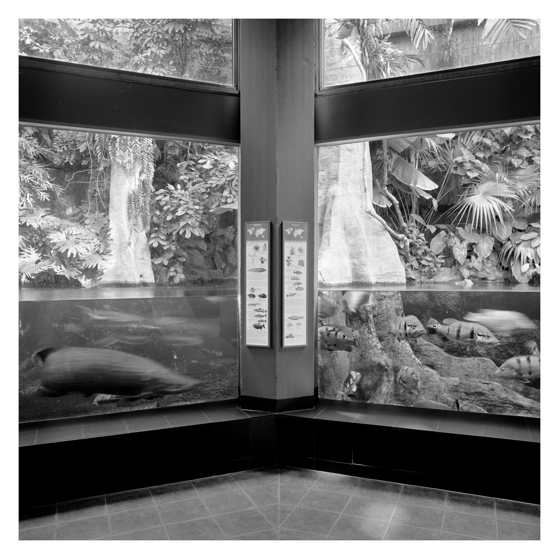 berlin_zoo_aquarium_081.jpg