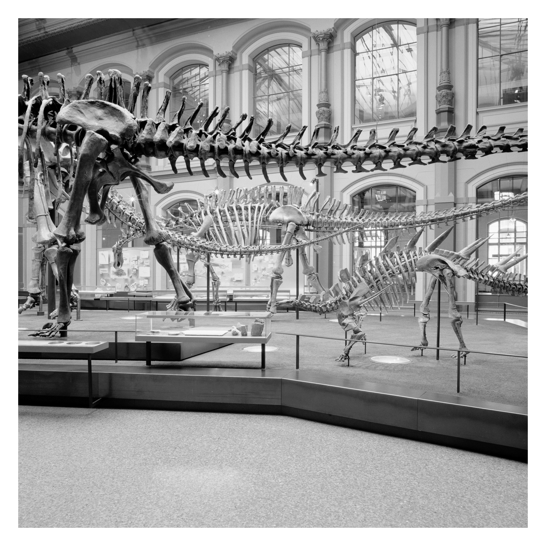 naturkunde_museum_berlin_042.jpg