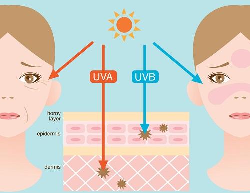 uva-and-uvb.jpg