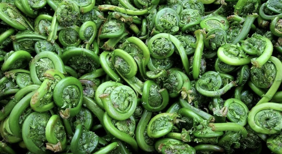 Fiddleheads in Garlic Lemon Butter Sauce