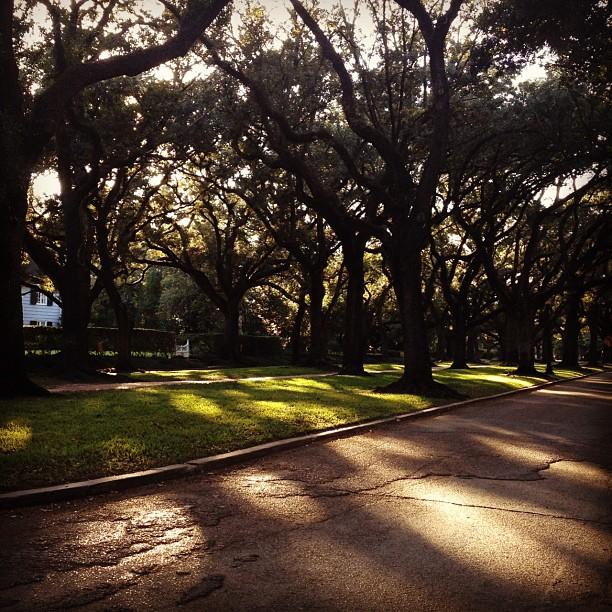 02 Trees 1