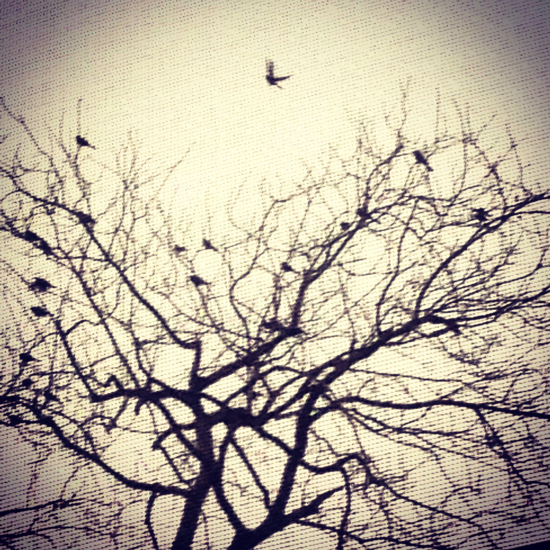 12 Trees 1