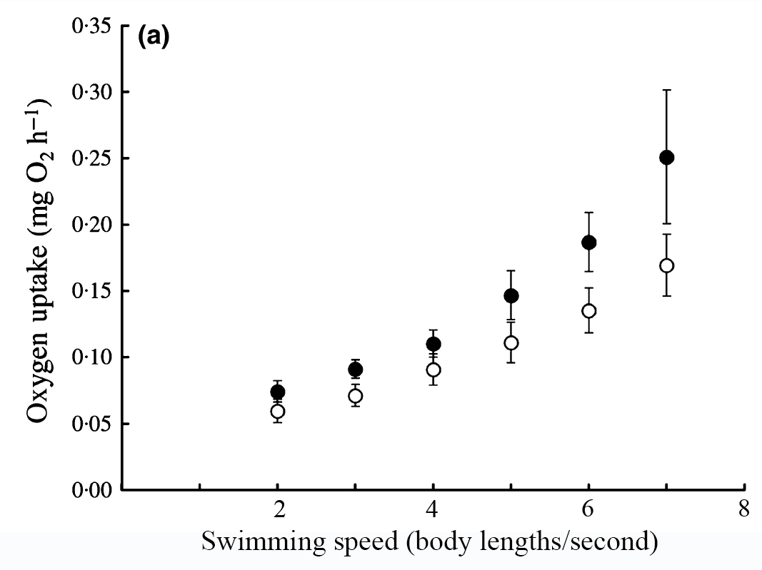 Figure 1. Changes in the oxygen required to swim a various speeds in female guppies. White circles represent females that had been exposed to high levels of male harassment for five months; black circles are females receiving low levels of harassment. From Killen, S.S., Croft, D.P., Salin, K., Darden, S.K. 2015. Male sexually coercive behaviour drives increased swimming efficiency in female guppies. Functional Ecology. doi: 10.1111/1365-2435.12527