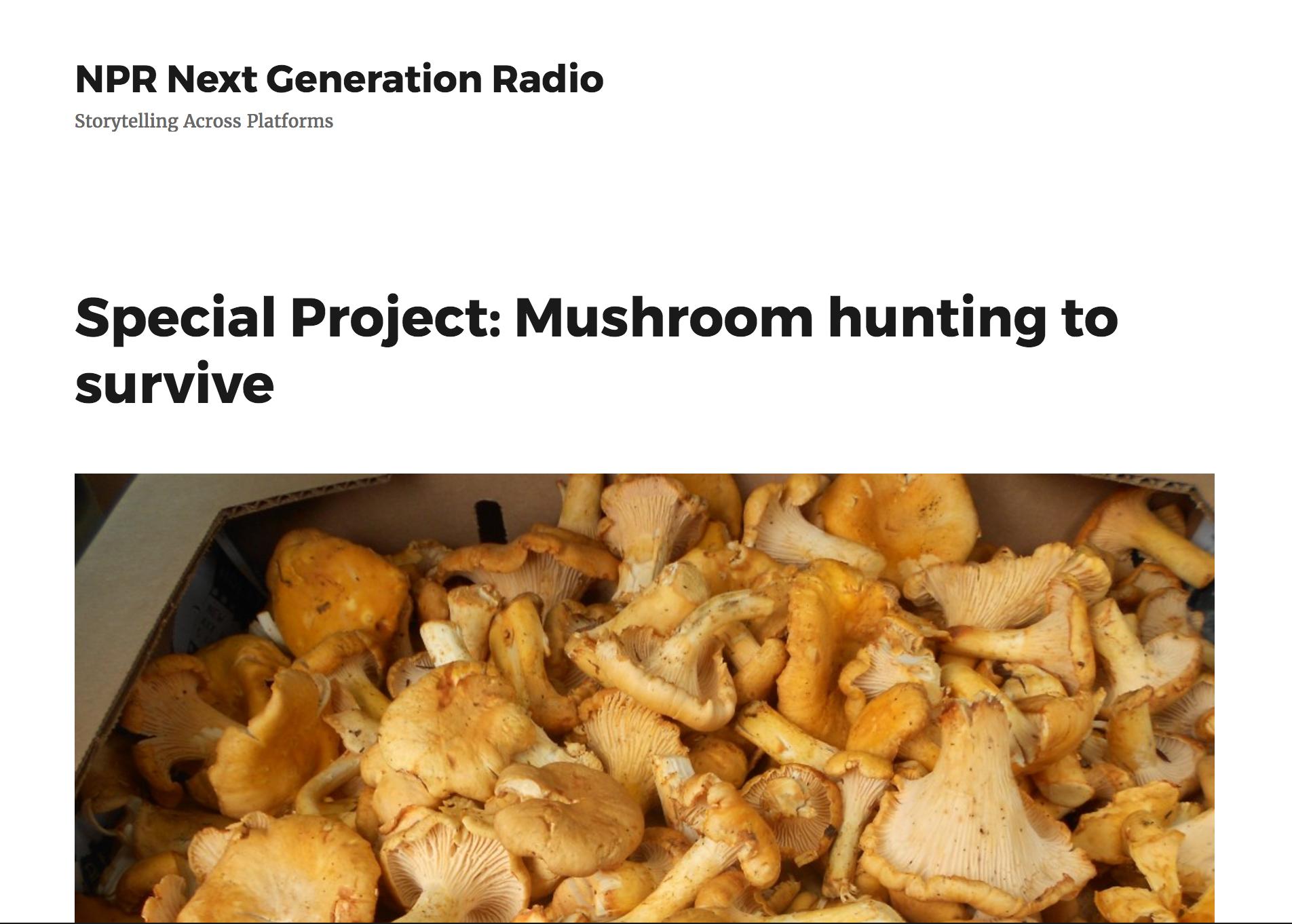 NPR NextGen Special Project:  Mushroom Hunting to Survive