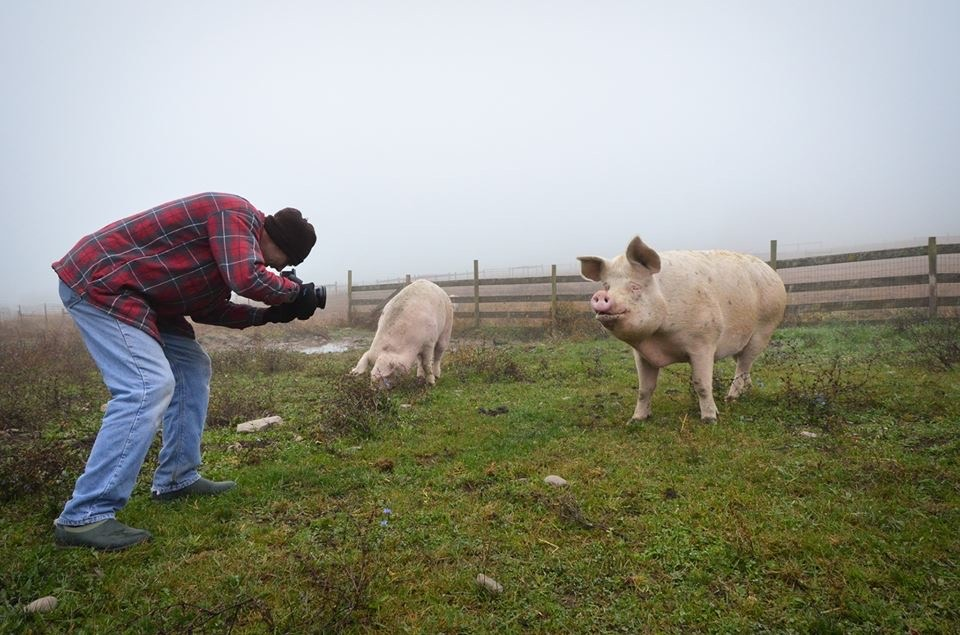 photographing at Farm Sanctuary