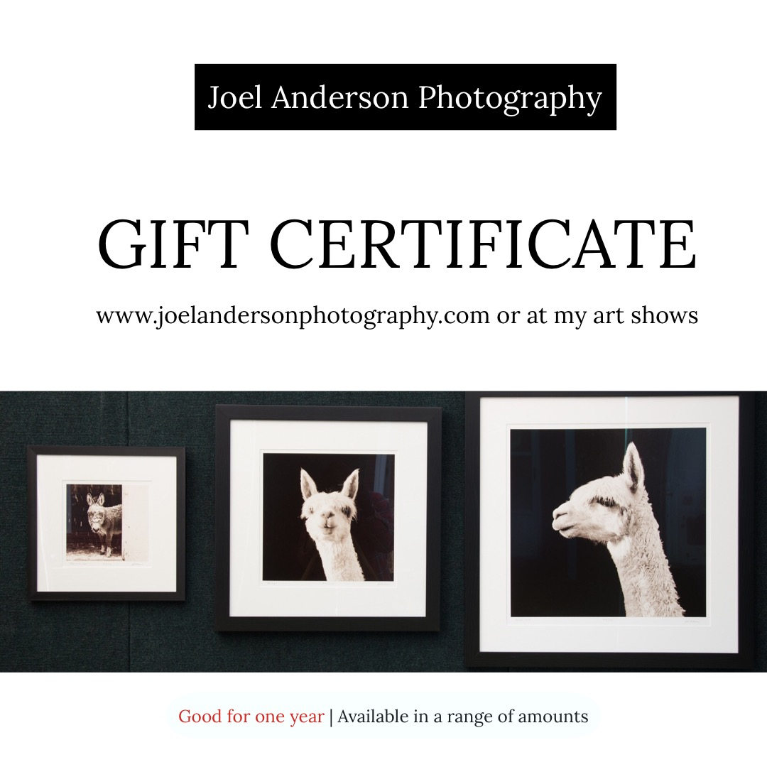 can be used online or in person at my art shows -