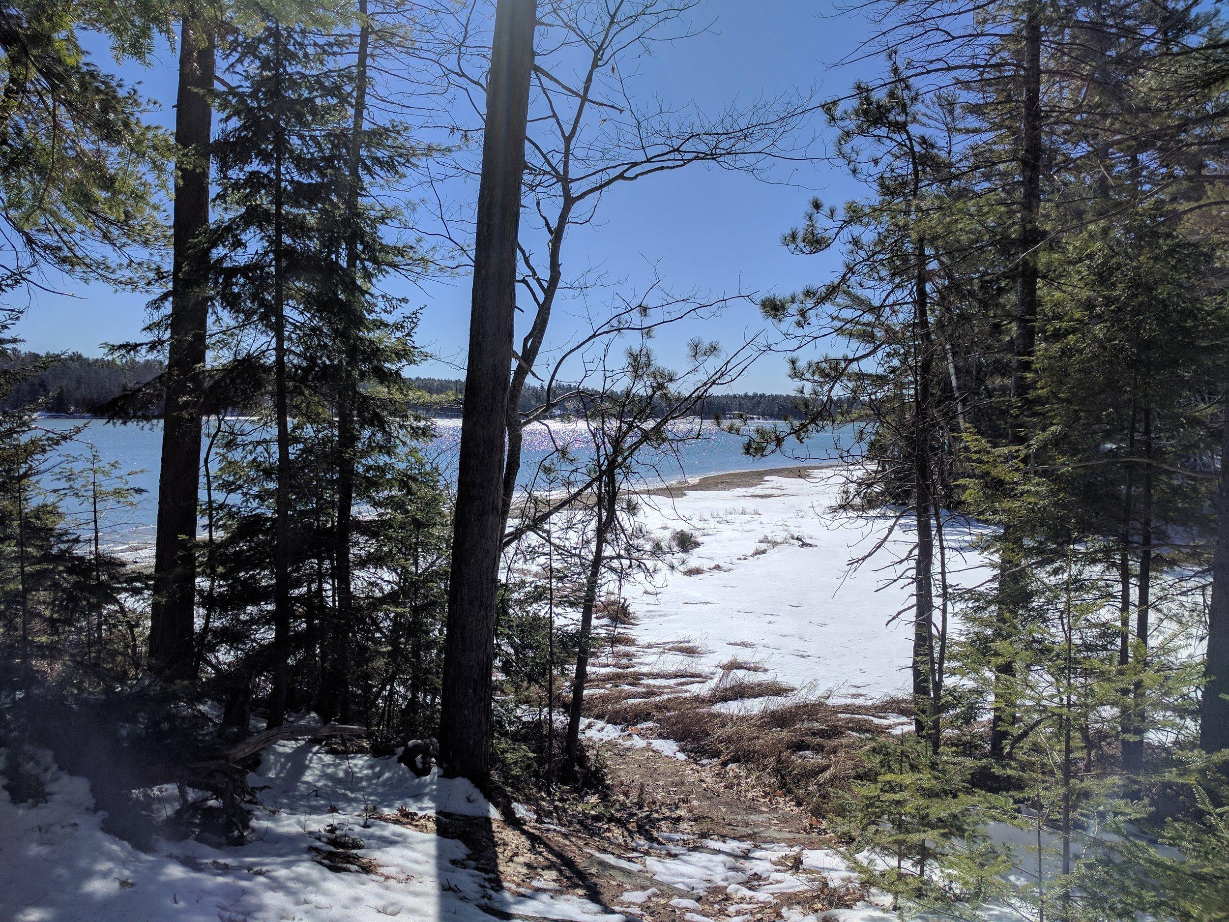 Winter cove thru trees.jpg
