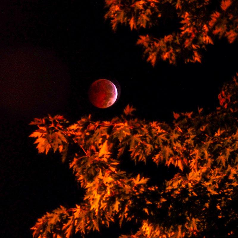 MAG_lunareclipse08p.jpg