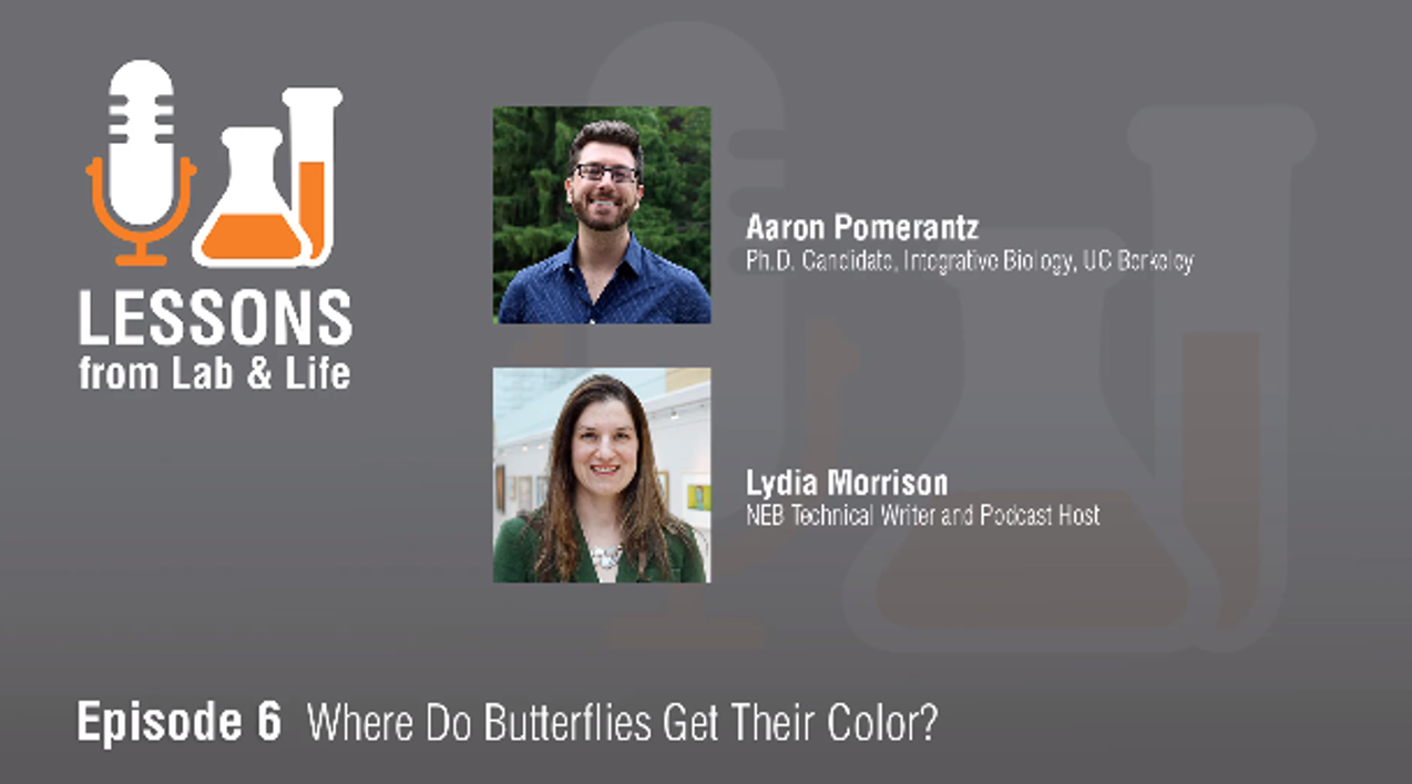 Where do buttterflies get their color podcast.png