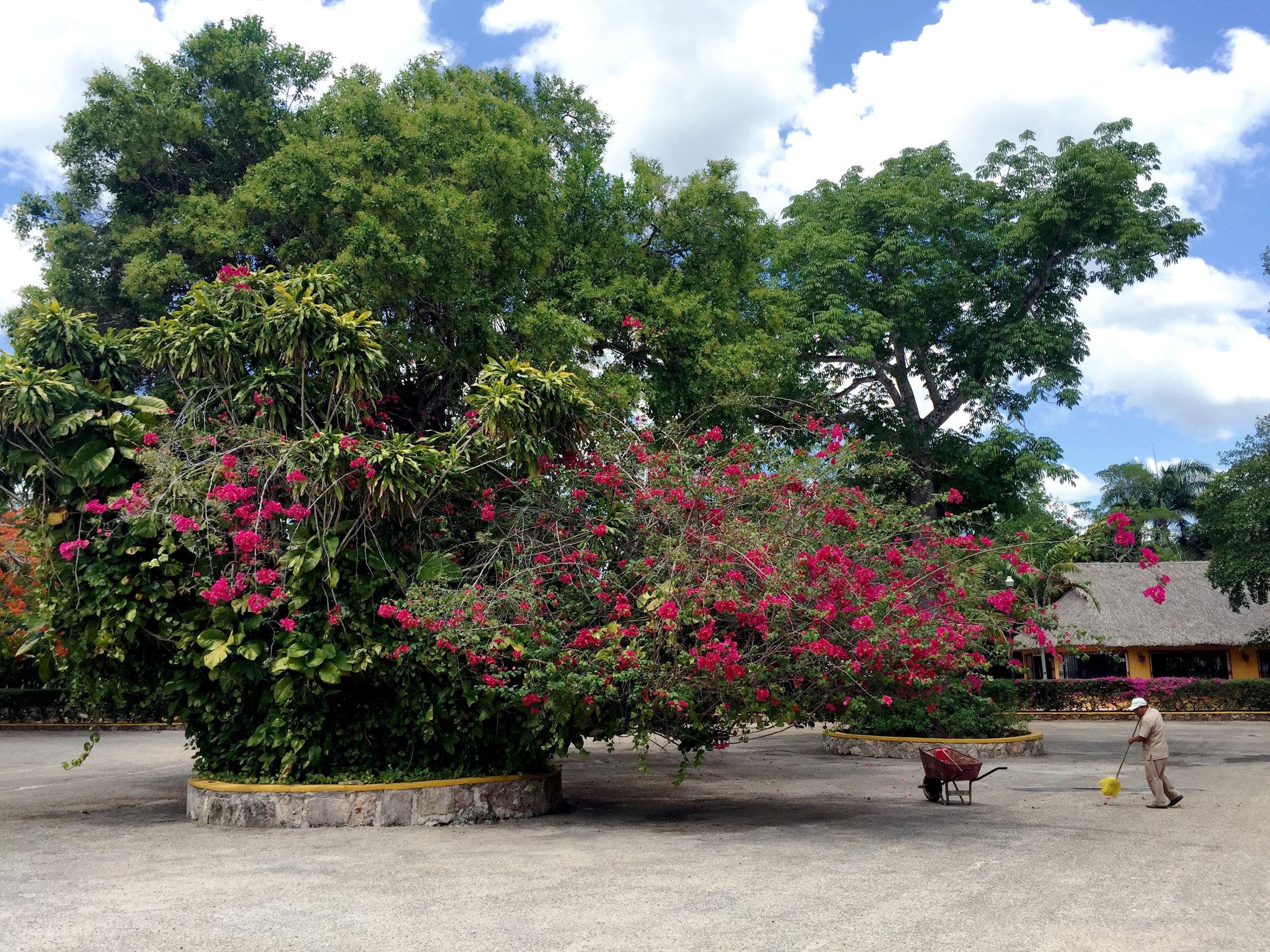 Cenote Il Kil, Mexico