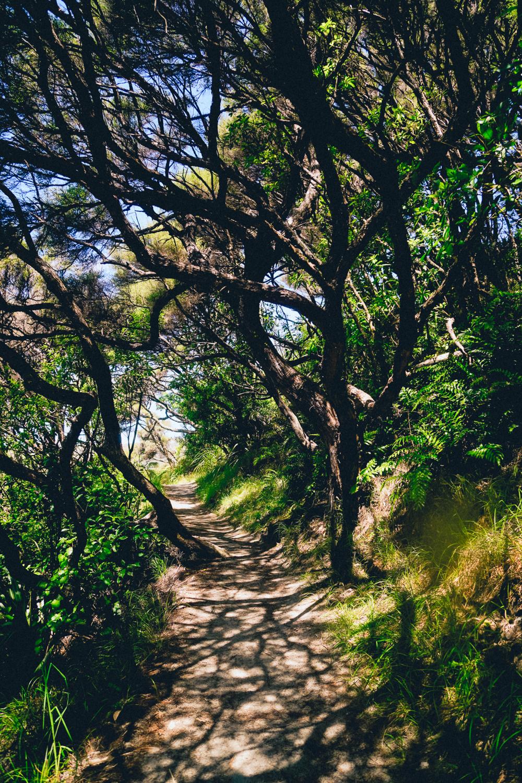 Path to Wharariki Beach, Puponga, South Island