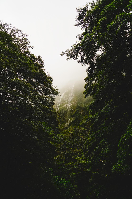 Milford Sound Highway, South Island