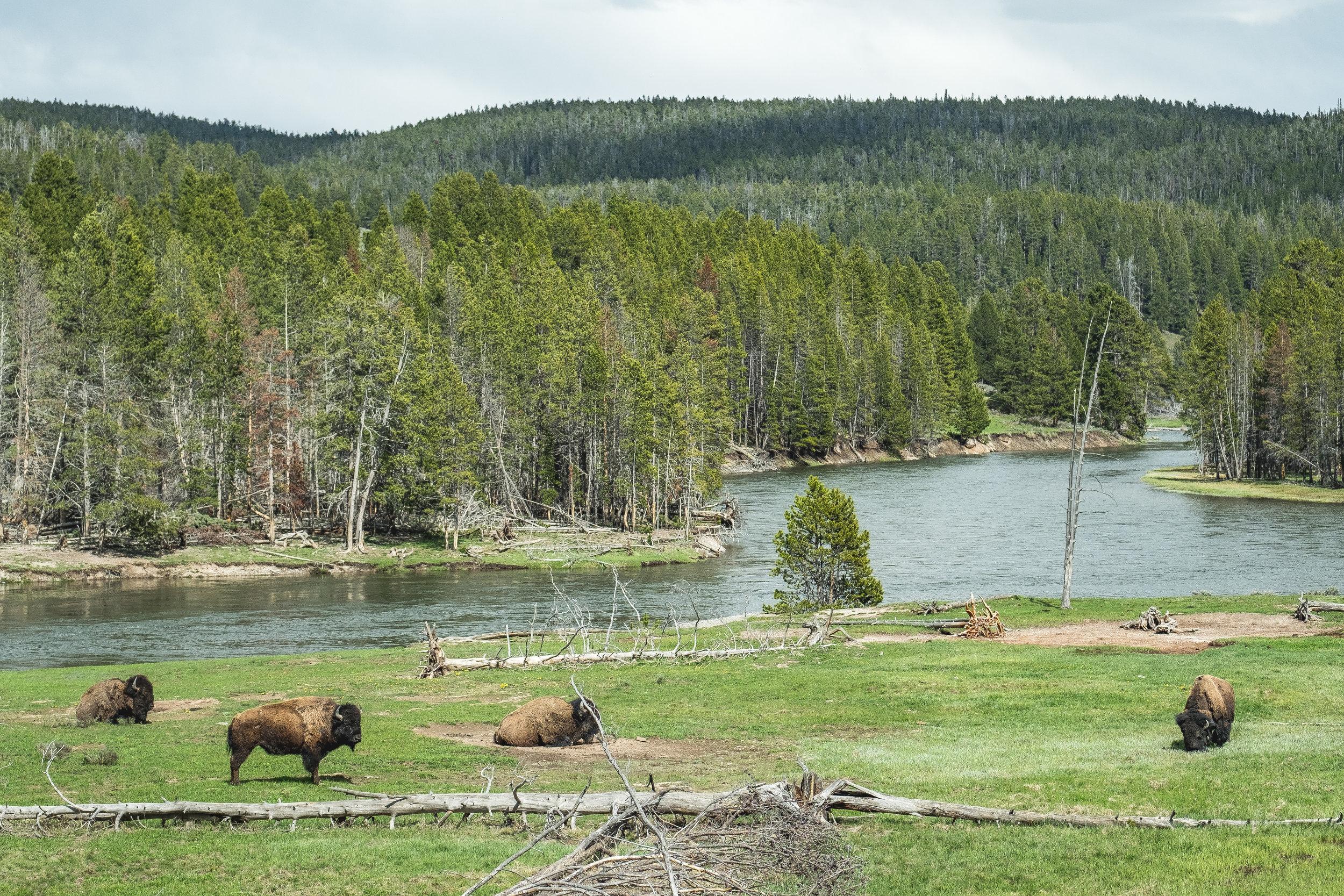 Yellowstone Trip_13.jpg