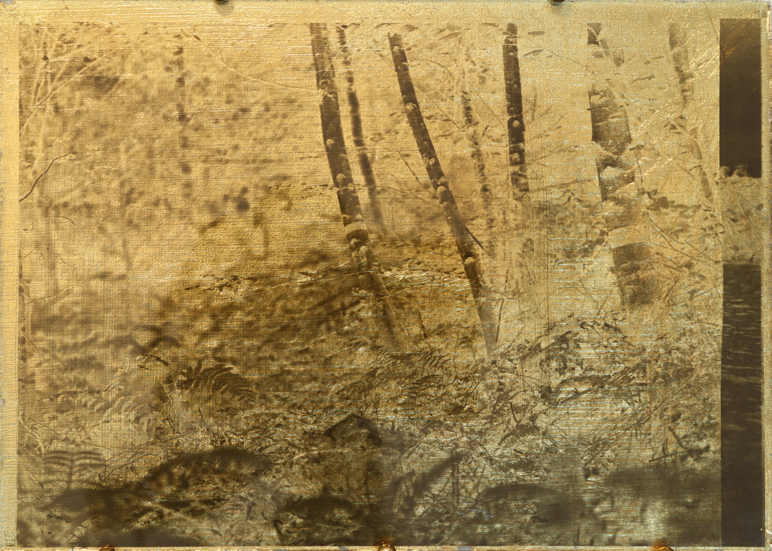 Nothing Gold Can Stay 10  , 2019  Glass plate negative circa 1910 and gold leaf  5 x 7 in.
