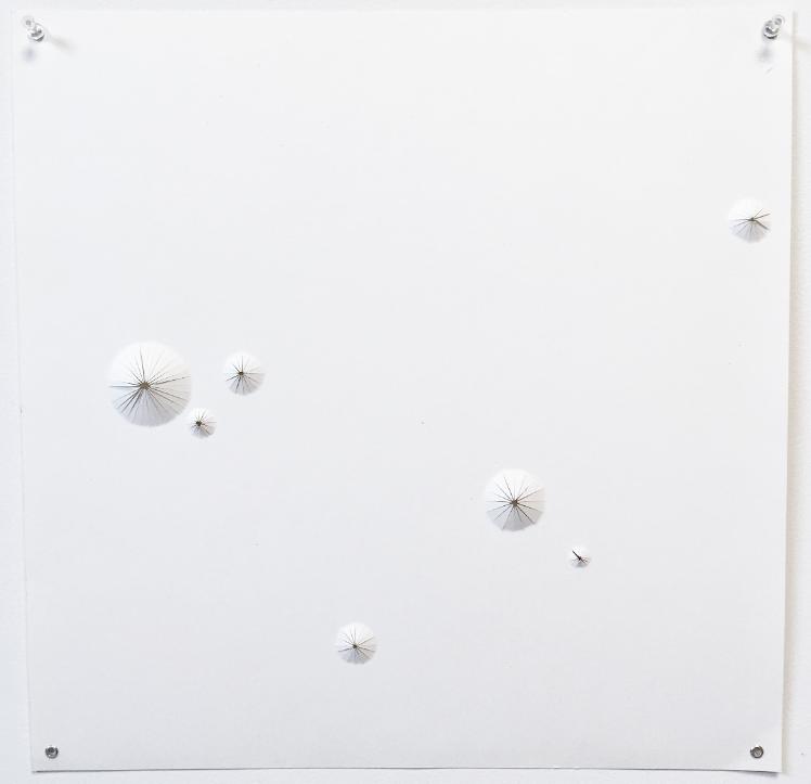 Nonpareil #3  , 2015  Hand-cut paper  17.5 x 17.5 in.