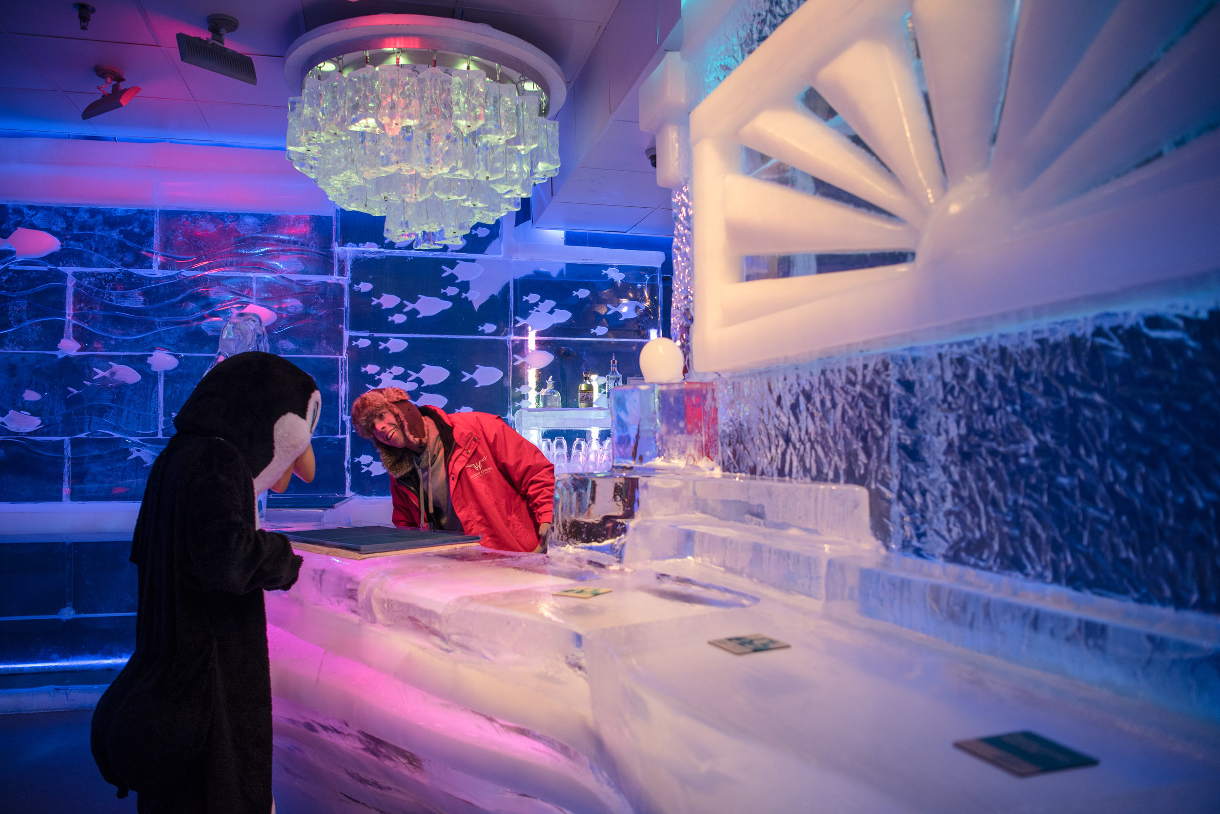 Derrick Howard and the entertaining penguin at the Minus 5 ice bar at Mandalay Bay Resort and Casino on Thursday, June 15, 2017, in Las Vegas. Morgan Lieberman/Las Vegas Review-Journal