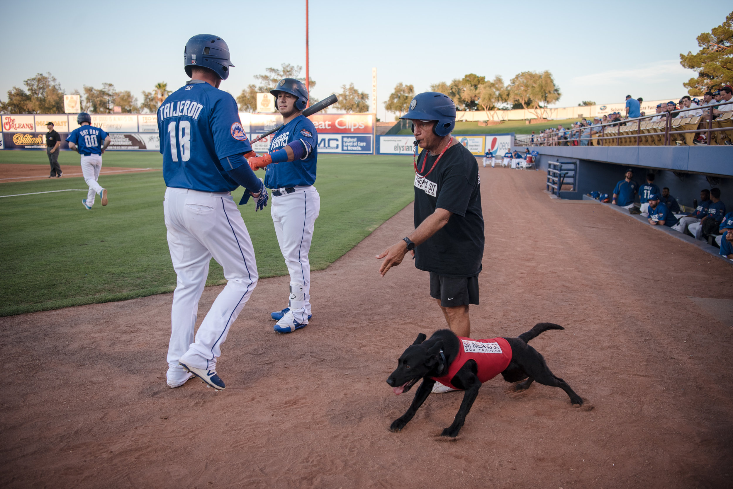 Finn, a 5 year-old labrador, and his trainer, Fred Hassen, anticipate the next bat at the Las Vegas 51s game on Saturday, July 15, 2017, at Cashman Field in Las Vegas. Morgan Lieberman Las Vegas Review-Journal