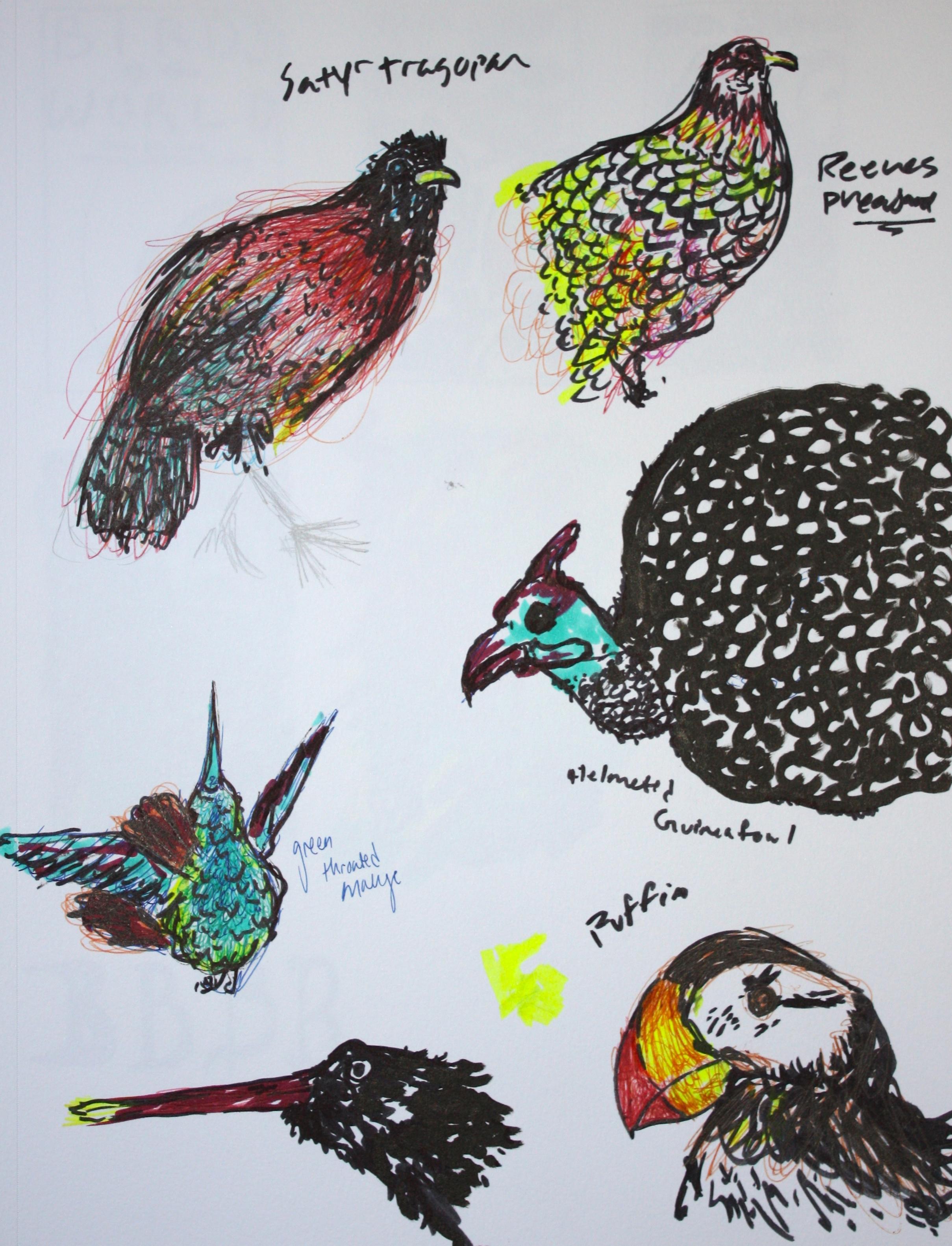 Whole Lotta Birds