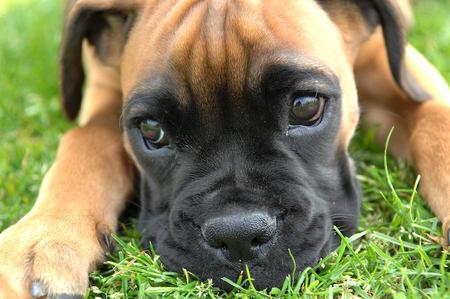Baby Boxer.jpg