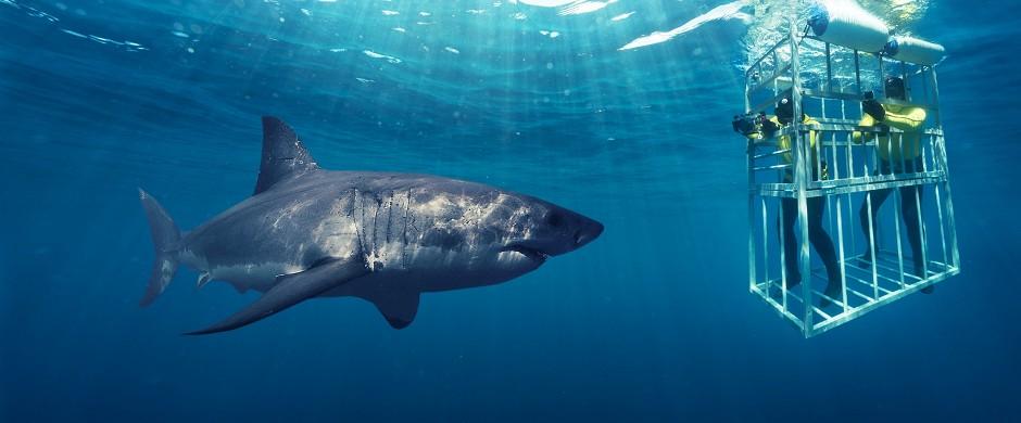 Cape Town Sharks.jpg