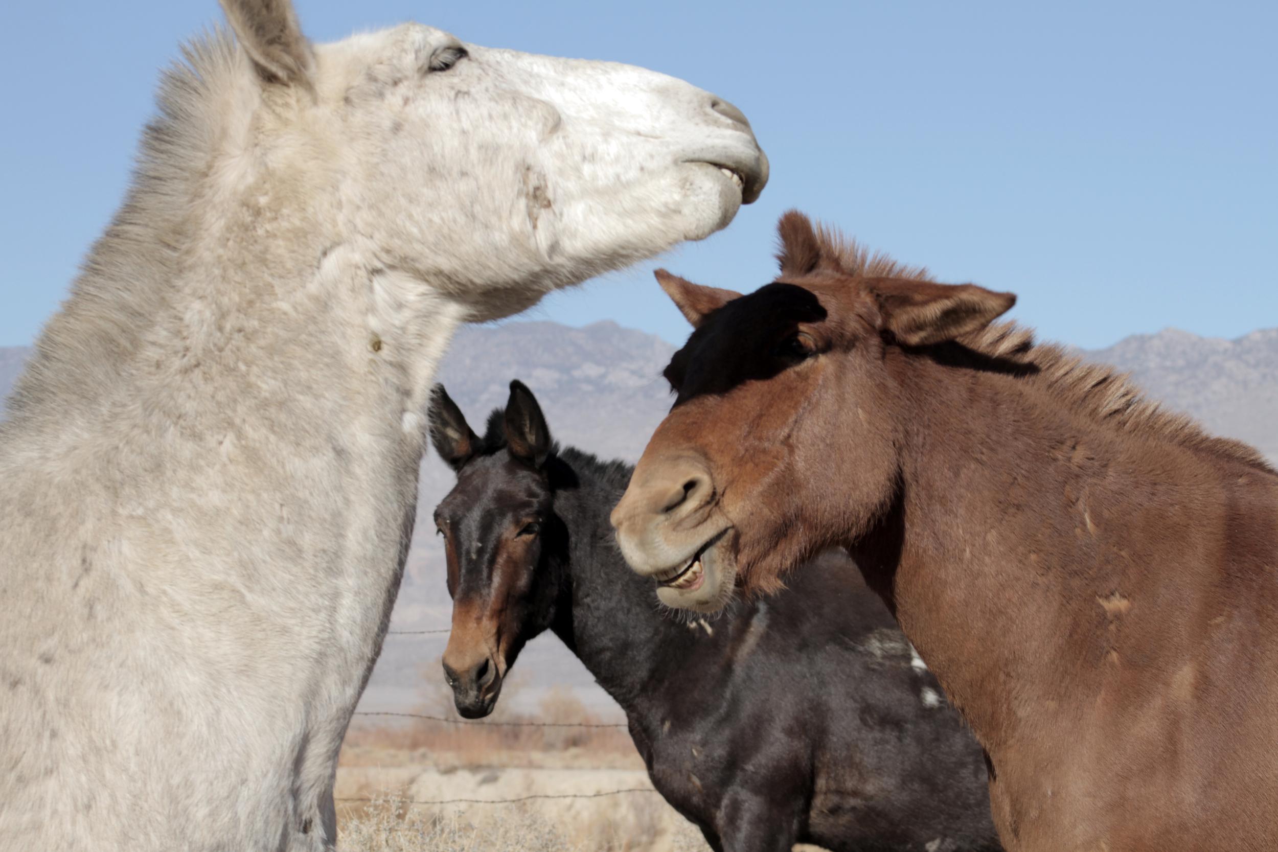 HORSES_LAUGHING.jpg