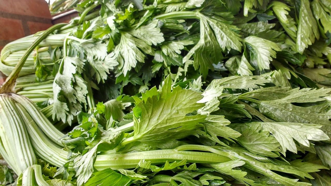 celery leaves.jpg