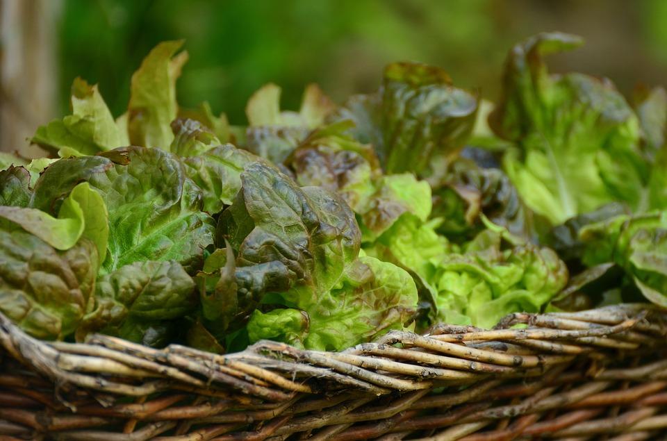 salad-1516694_960_720.jpg