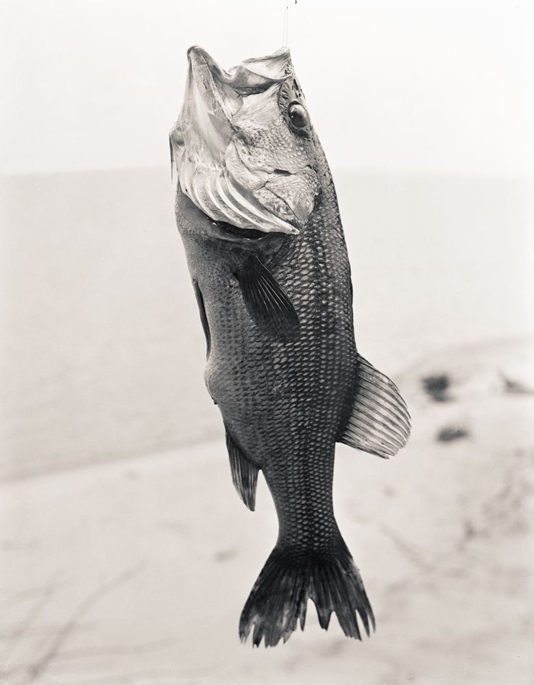 Largemouthbass.jpg